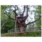 Dėmesys Seniesiems medžiams