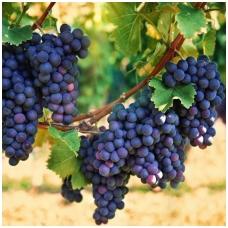Vynmedis 'Concord' C2