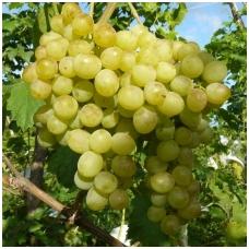 Vynmedis ,Jubileinyj Novgoroda' C2