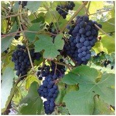 Vynmedis 'Juodupė' C2